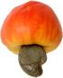 Cashew_Brazil_fruit_3a