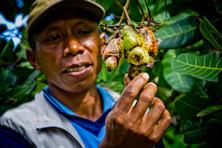 cacaofarmer